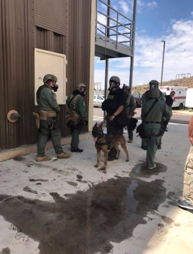 Gallup.K9.SWAT.1